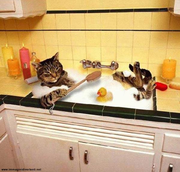 Scopri le immagini pi carine e divertenti del web - Si fa in bagno 94 ...