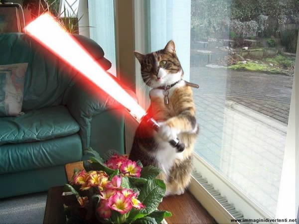 Scopri le immagini pi carine e divertenti del web - Fare il bagno al gatto ...