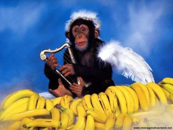 Cazzeggio!!! - Pagina 38 Scimmia-suona-lira