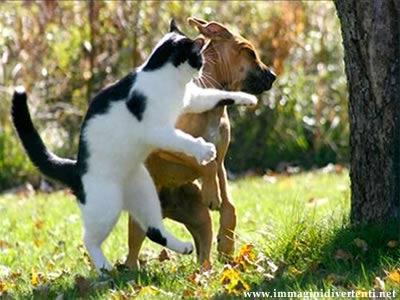 Immagine Foto Divertente: Fotografia Divertente Animali