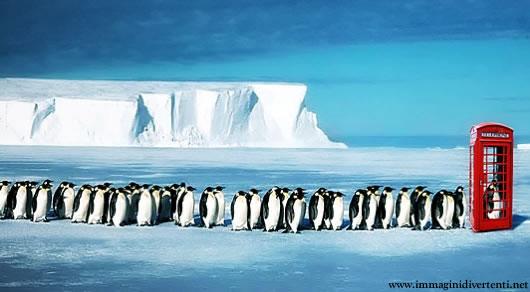 Immagine Divertente Pinguini: Immagine Divertente Cabina Pinguini