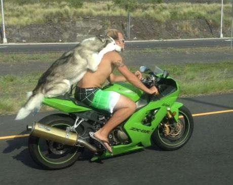 Immagine Divertente Animali: Cane in Moto