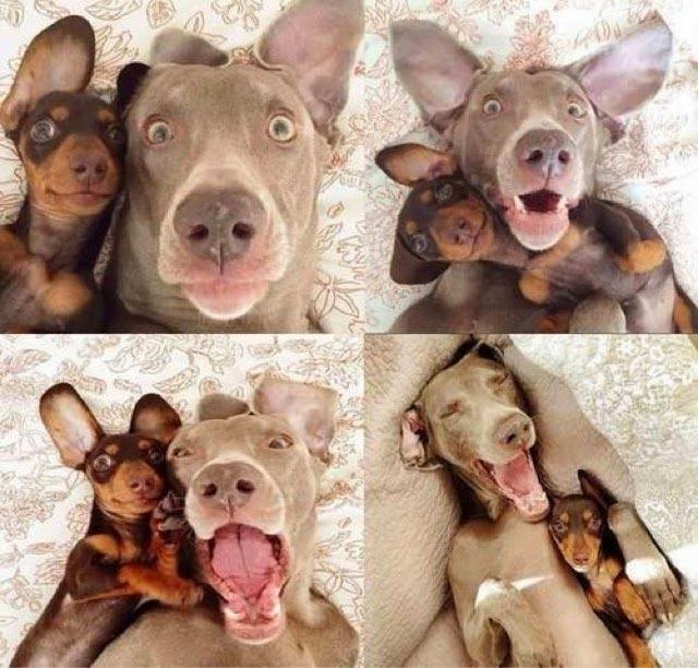 Immagini Divertenti:cani Buffi: Cani divertenti