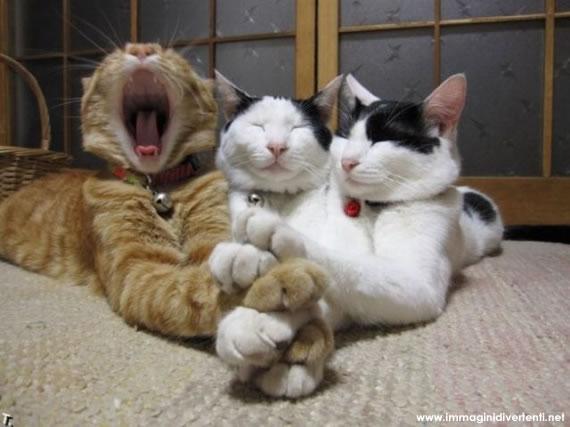 Immagine Divertente Gatti: GATTI RILASSATI