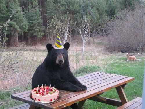 Immagine Divertente Compleanno Orso: Compleanno Orso
