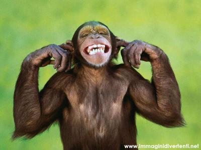 Immagine Divertente Scimmia: Scimmia sorridente
