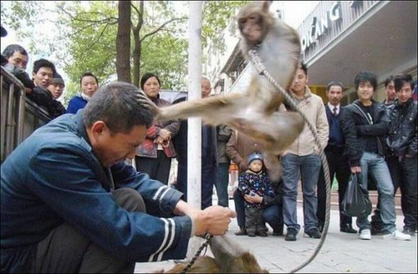 Immagine Divertente Scimmia Karate: Scimmia Karate