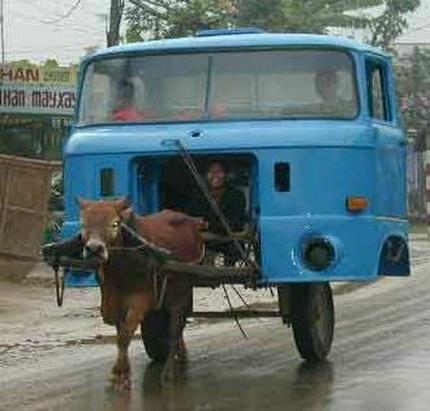 Immagine Divertente Trasporto: Trasporto Animale